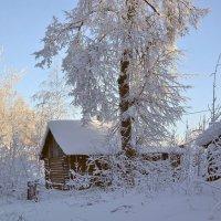 Морозный день :: Yasnji