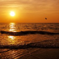Гоанские закаты.. :: Лариса Журавлева