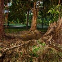 Сад корней :: Anatoliy Pavlov