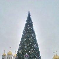 Городская ёлка! :: Александр Бычков