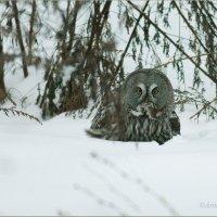 Удачная охота :: Анна Солисия Голубева