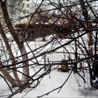 Вчера природа проливала слёзы... :: Нина Корешкова