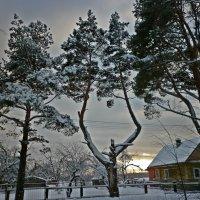 Двухглавое дерево :: Натали Пам