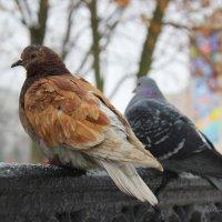 птички :: Анна Шишалова