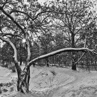 А в Подмосковье, оказывается, иногда бывает настоящая зима :: Alexandr Zykov
