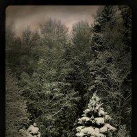 """В зимнем лесу."" :: victor buzykin"