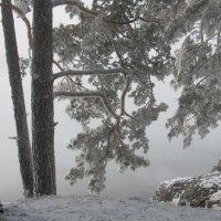 Холодный ноябрь :: MaOla ***