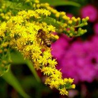 в красивых цветах :: Александр Прокудин