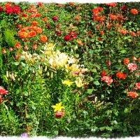 Райской красоты цветы :: Андрей Головкин