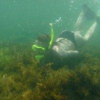 Отдых на море, Крым. Скнорлинг. Подводные пейзажи-2. :: Руслан Грицунь