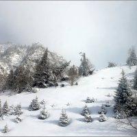 В горах родились ёлочки... :: Сергей Савич.