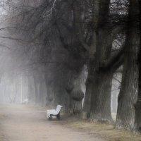 Старые липы..... :: Юрий Цыплятников
