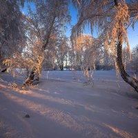 Околдован лес стоит, чудной жизнью он блестит 13 :: Сергей Жуков