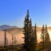 Розовый туман :: Сергей Чиняев