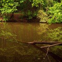 Лесные места :: Julia Volkova