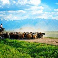 Одинокий пастух :: santamoroz