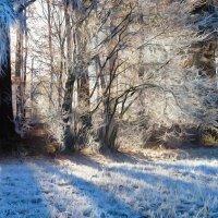 зимний сон :: Elena Wymann