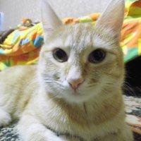 Котя :: Виктория ***