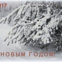 С наступающим Новым Годом, друзья! =))) :: Елена Перевозникова