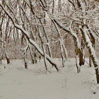Зима. :: владимир