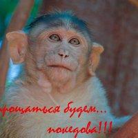 Будете у нас на Гоа - милости просим ))) :: Владимир Хиль