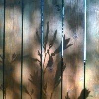 Солнце рисует :: Tanja Gerster