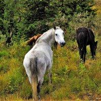 Белая лошадь в лесу :: Сергей Чиняев
