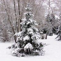 Снежком мороз укутывал ..... :: раиса Орловская