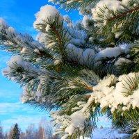 Зимняя прелесть :: Катя Бокова