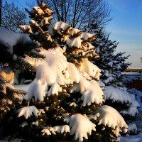 Зимушка зима... Всем хорошего новогоднего настроения!!! :: *MIRA* **