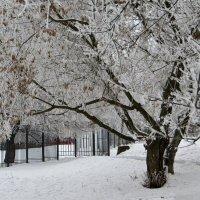 Деревья разукрасил иней :: Татьяна Смоляниченко