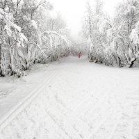 Лыжник :: Александр Неустроев