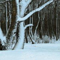 Холодный лес :: Виталий Латышонок