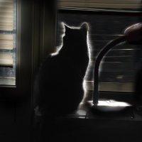 Кот и уходящий год. :: Александр Бодягин