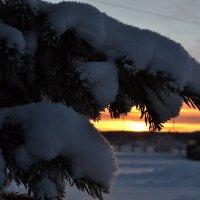 Снежные лапы :: Ольга