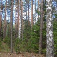 В весной в лесу :: Александр Попков