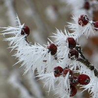Хрупкие кристаллы инея :: Татьяна Смоляниченко