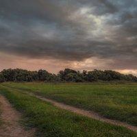 поле :: svabboy photo