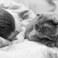 Хранитель снов :: Anna Ozero