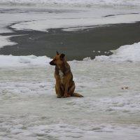 Охранная собака: охраняет пруд! :: Андрей Лукьянов