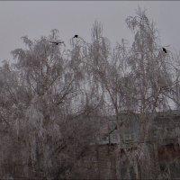 Три вороны :: Нина Корешкова