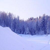 Заколдованный лес :: GalLinna Ерошенко