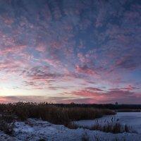 Рождение зимнего утра :: Лидия Цапко