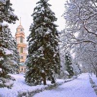 Зима в парке. :: Евгений Кузнецов