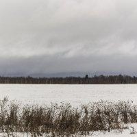 кукурузное поле зимой :: Алексей Горский