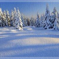 В Новогоднем лесу :: Лидия (naum.lidiya)