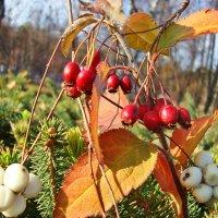 Осенний натюрморт на природе :: Лидия (naum.lidiya)