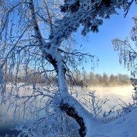 Кружевной лес :: Галина