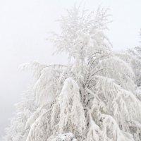 Белые одежды :: Александр Михайлов