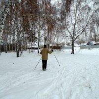 Зима , январь 2017 год. :: Мила Бовкун